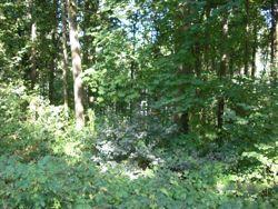 stalag 13 woods