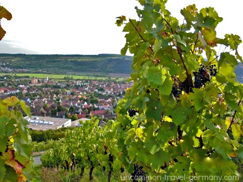 hammelburg vineyards and town