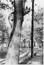 hilters blondi in tree
