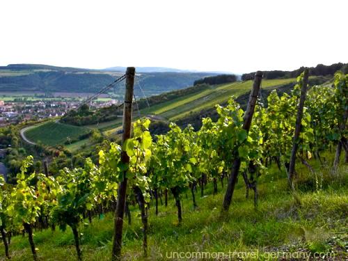 vineyards near hammelburg