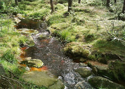 mountain stream, brocken, harz