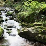 Rushing stream over rocks in in green forest