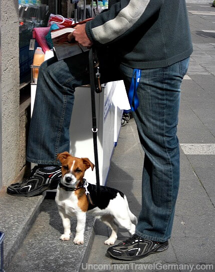 Man shopping in Hammelburg Germany with Jack Russel Terrier