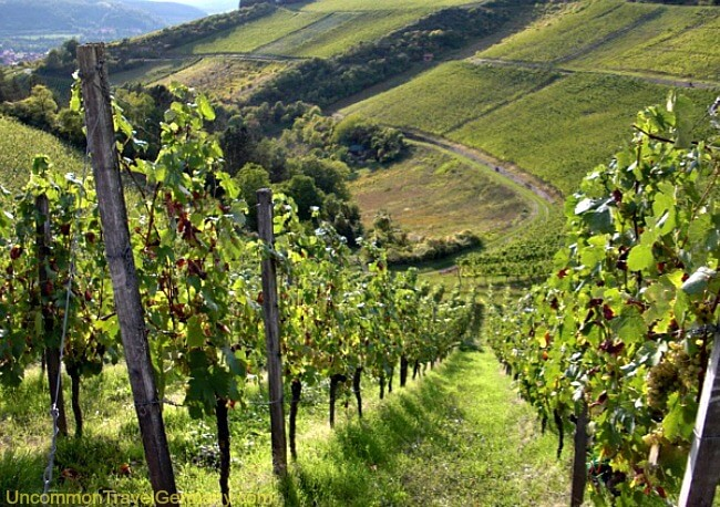 Vineyards on hill above Hammelburg Germany