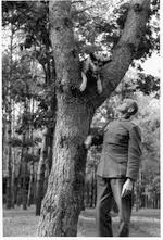 Blondi in a tree, with handler Tornow