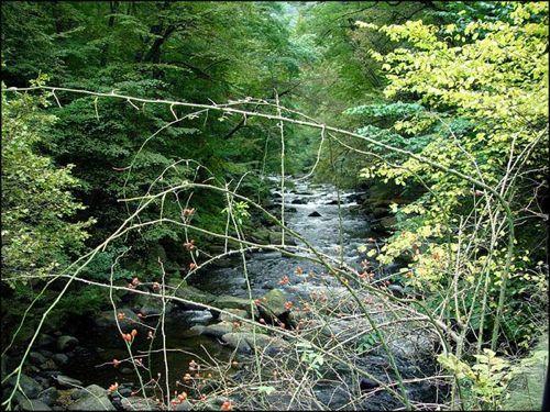 Bode River, near Thale, Harz Mountains