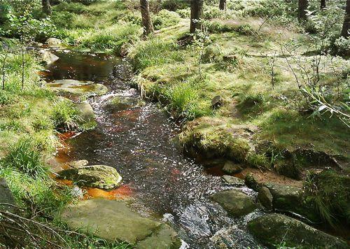 Stream on the Brocken, Harz Mountains