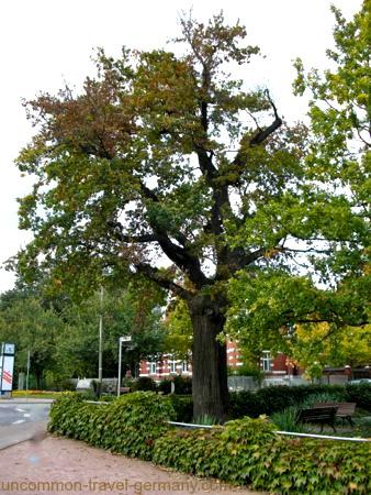 Martin Luther's Oak Tree in Wittenberg Germany